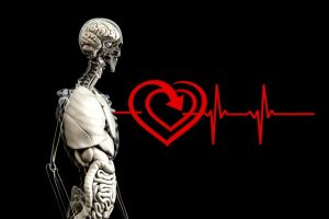 kostra so srdcovym tepom